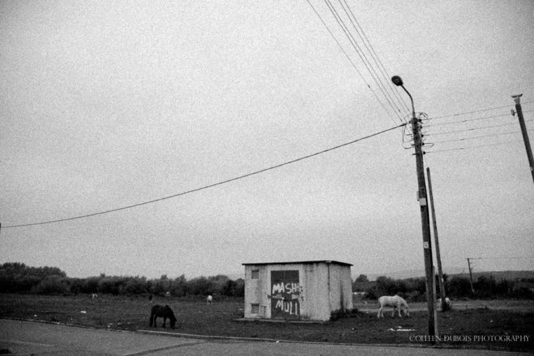 Limerick Ponies
